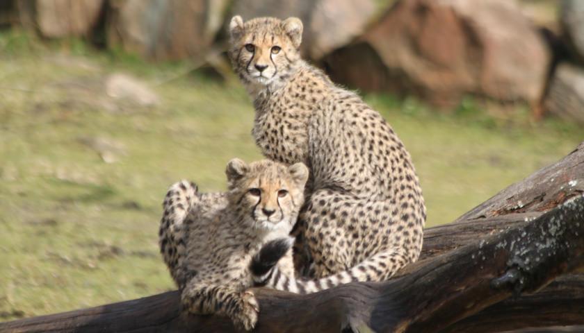 boraas-dyrepark