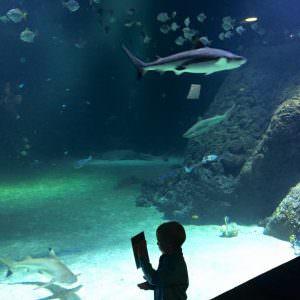 Hajer-og-andre-fisk-i-Universeum