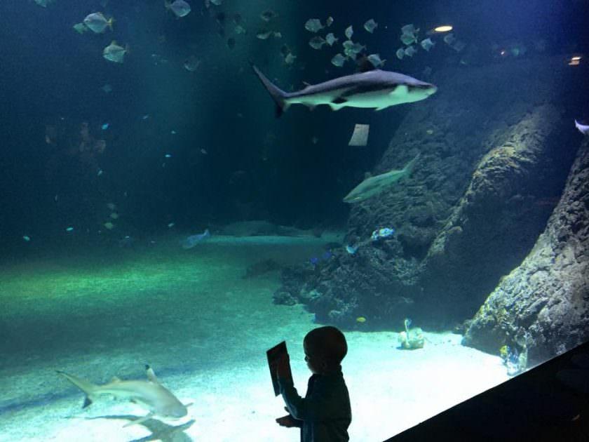 Hajer og andre spøndende fisk i Universeum